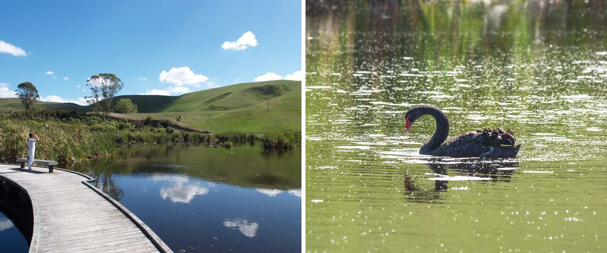 Wetland Pekapeka Hawkes Bay. A family friendly Hawkes Bay attraction